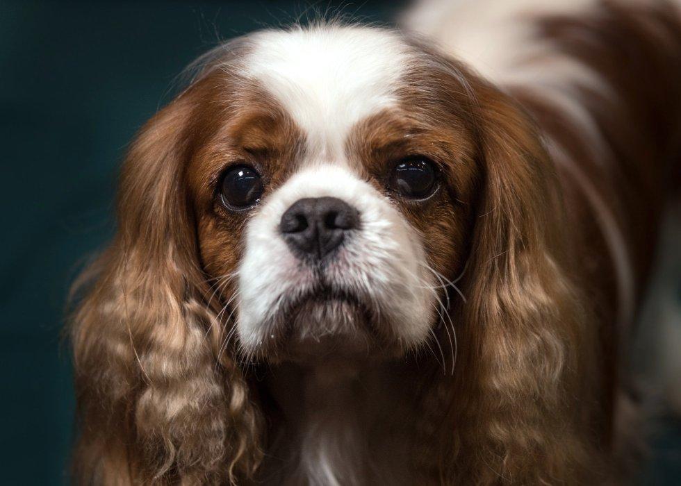 Los Perros Más Bonitos Del Mundo 30 Fotos Nocturnar