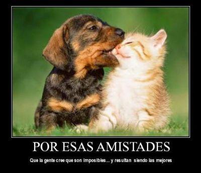 93 Frases De Amistad Cortas Muy Bonitas En Imagenes