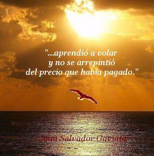 Las Mejores 40 Frases de Juan Salvador Gaviota   Nocturnar